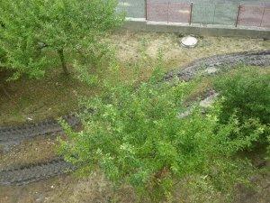 N - Revitalizace zahrady