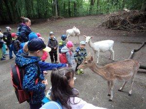 B -  Výlet do Zoo Zittau - květen 2019